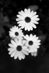 white flowers by balakov on flickr
