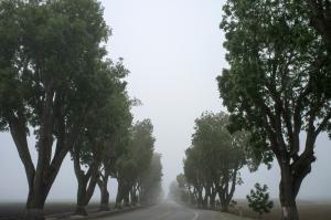 wood-road-street-trees_unsplash_CC0license